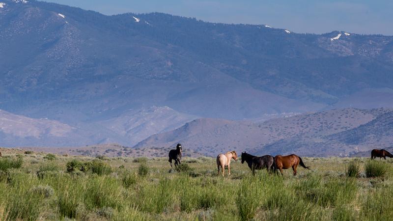 Wild Mustangs 2019-45.jpg