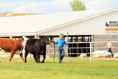 Junior Beef Showmanship Sunday
