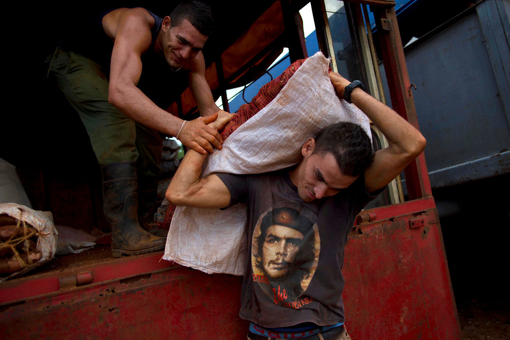 """. In this Sept. 30, 2013 photo, farmer Abel Reyes, wearing a shirt decorated with an image of Cuba\'s revolutionary hero Ernesto \""""Che\"""" Guevara, carries a sack of sweet potatoes known as \""""boniato\"""" at the 114th Street Market on the outskirts of Havana, Cuba. Depending on the growing season, fruits and vegetables are on offer in the muddy, truck-packed expanse, from pineapples and melons to tomatoes and a starchy local plant called malanga. (AP Photo/Ramon Espinosa)"""