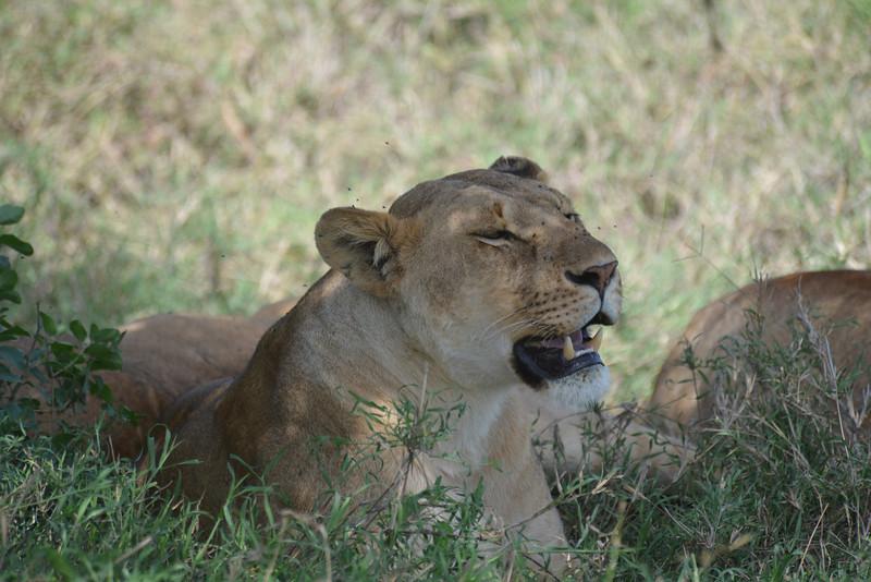 East Africa Safari 323.jpg