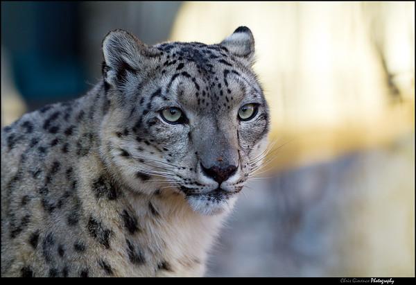 Denver Zoo 11-27-11