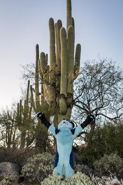 Arizona New Years 2019-101.jpg