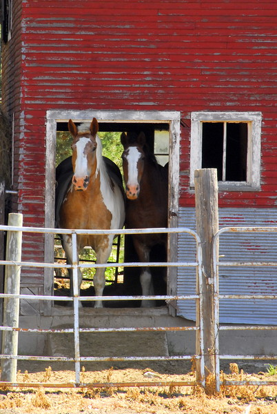 Welcome to Our Barn