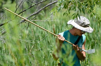 Photos: Longmont Mosquito Testing