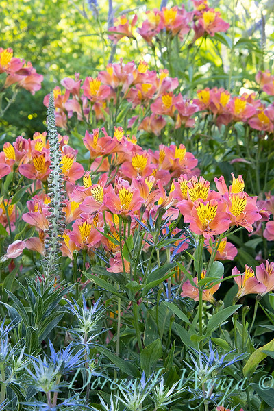 Pettifer's Garden - Virginia Price designer_1017.jpg