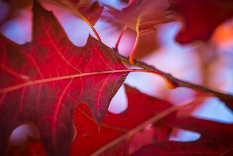20151024-Fall Colors-76.jpg
