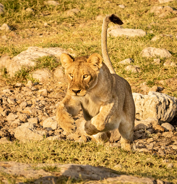 Playful cub 3