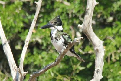 Texas ; Rio Grande Valley Birding Festival - November 2013