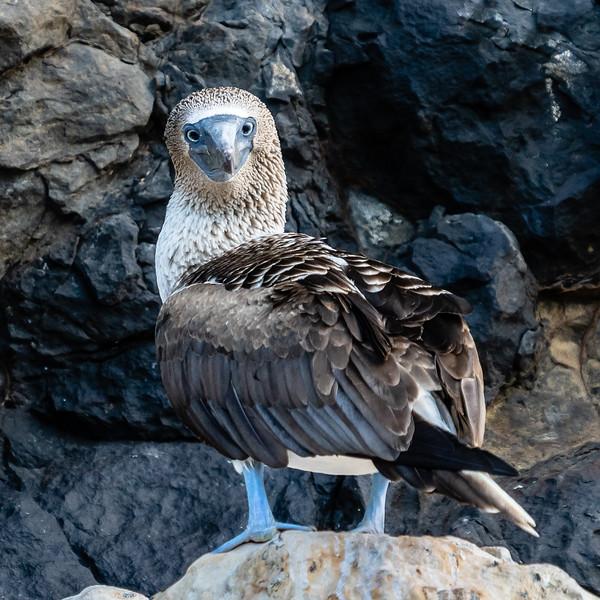 Galapagos-3163.jpg