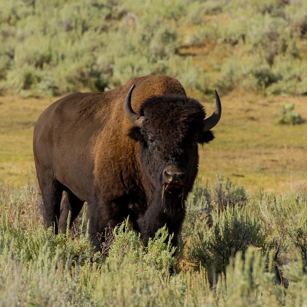 Yellowstone Day 2 R-5259.jpg