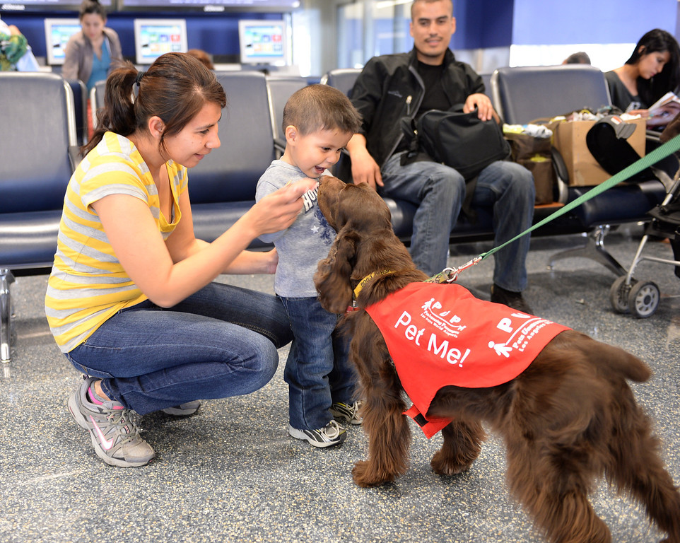 ". Gabriella Ortiz and son Osvaldo greet ""CC\"". New program at LAX called PUP (Pets Unstressing People) uses certified dogs to walk the terminals with their volunteer owners to greet passengers and help ease the tensions of modern airline traveling.   Photo by Brad Graverson 4-11-13"