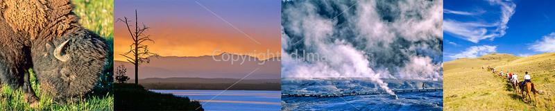 Yellowstone & Tetons (a few)