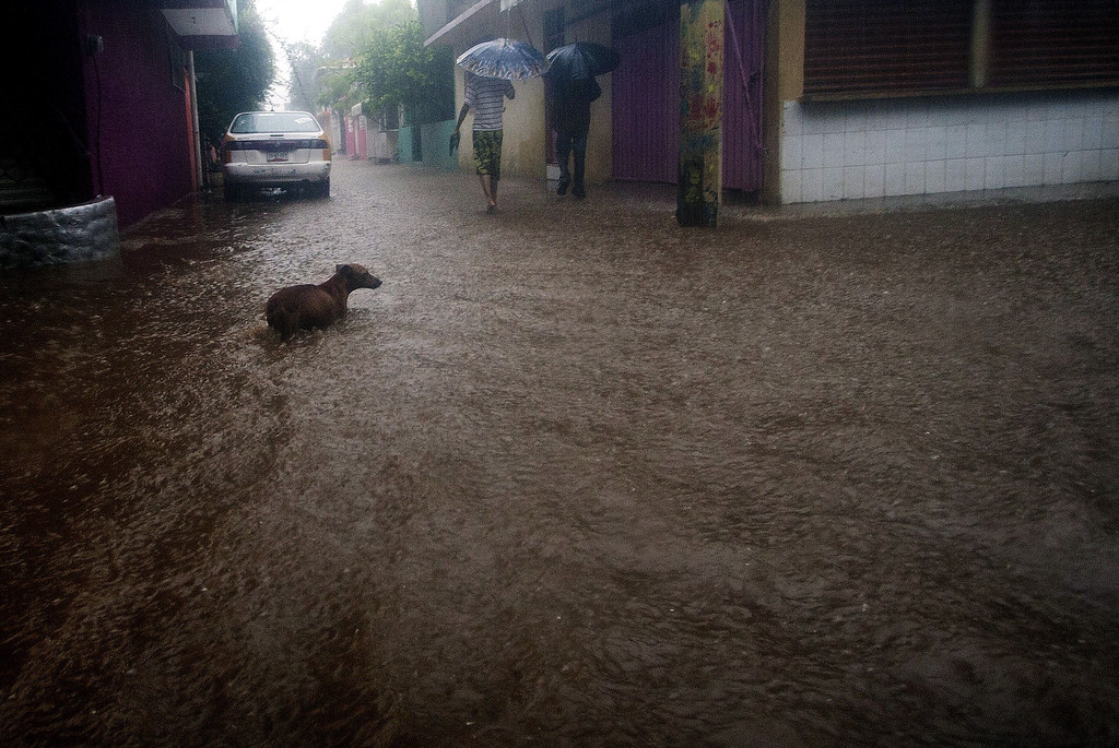 . TOPSHOTS A dog wades in a flooded street in Acapulco, Guerrero state, Mexico following tropical storm Manuel which landed in the Pacifiic coast of Mexico on September 15, 2013. Hurricane Ingrid and Tropical Storm Manuel triggered rain, landslides and floods on Mexico\'s east and west coasts Sunday, killing at least 20 people and forcing thousands to evacuate before landfall. Manuel was weakening after making landfall near the Colima state town of Manzanillo, packing top winds of almost 50 miles (85 kilometers) per hour as it moved northwest, the US hurricane center said.   Pedro PARDO/AFP/Getty Images