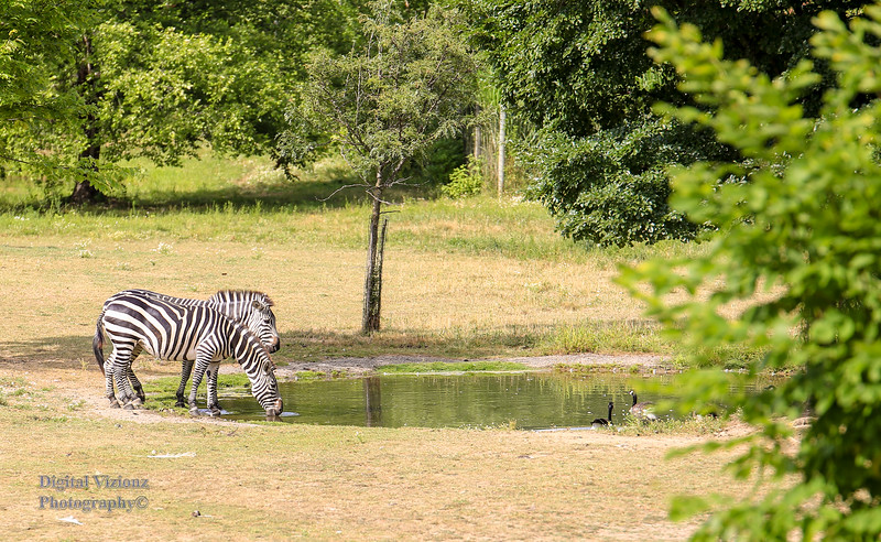2016-07-17 Fort Wayne Zoo 296LR.jpg