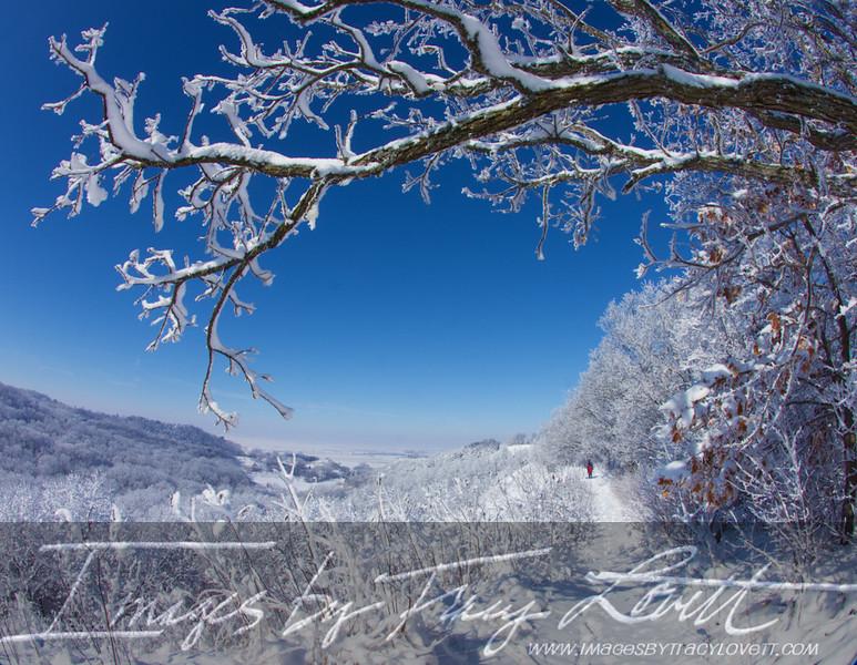 snow_3501 copy.jpg