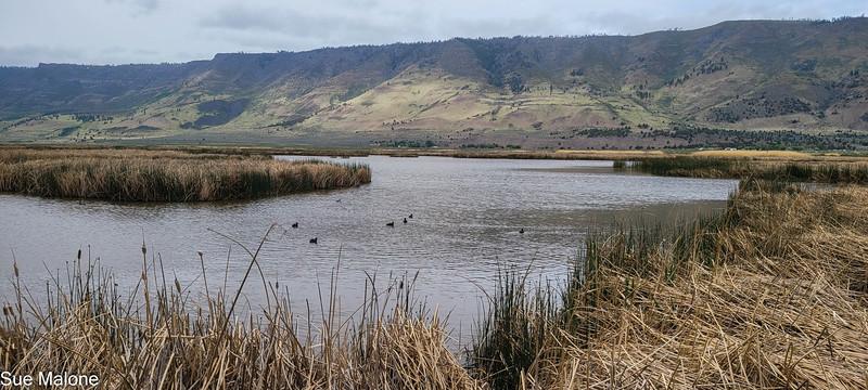 05-19-2021 Summer Lake Wildlife Refuge-6.jpg