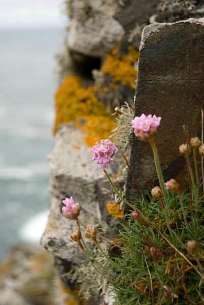 cliff flower.jpg