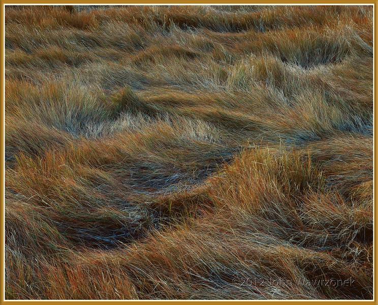 salt marshes