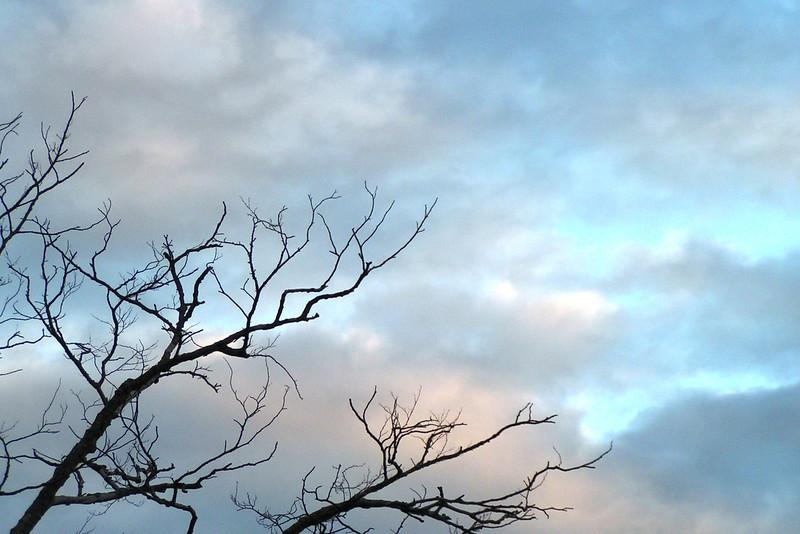 050709-001 (Tree Silhouette, Sky).JPG