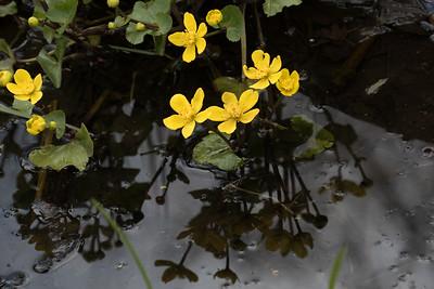 Flower Reflections - Blomsterspejlinger