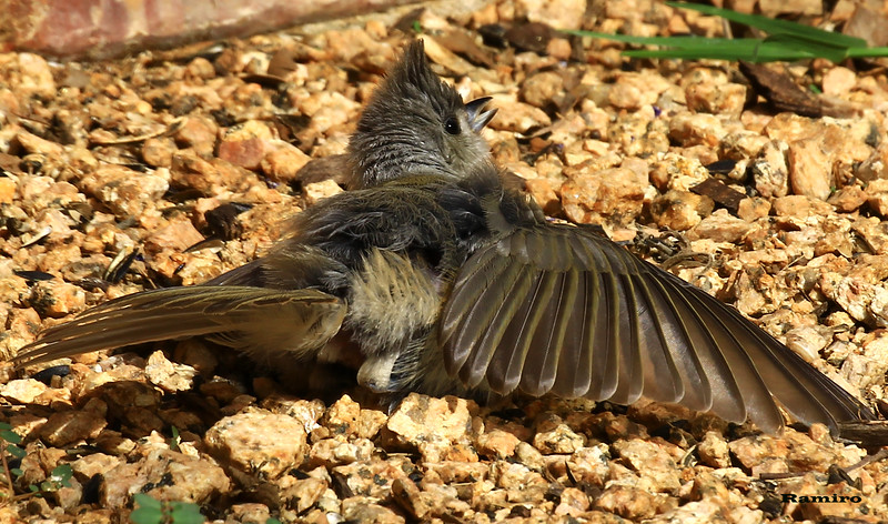 drying feathers 6-17-15 027.jpg