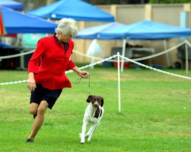 Summerfest Dog Shows in Ventura CA 2012