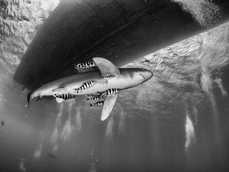 SharkQuest_29Jun18_0308-Edit-Edit.jpg