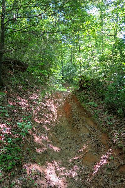 Bradley Creek Trail -- 2,540'