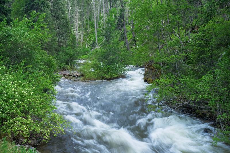 Slate Creek Spring Flow June 2020.jpg