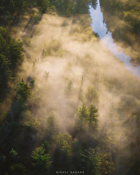 Misty woods in the Adirondacks