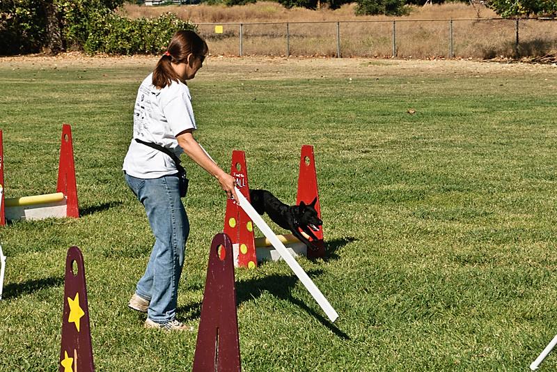Flyball-117.JPG