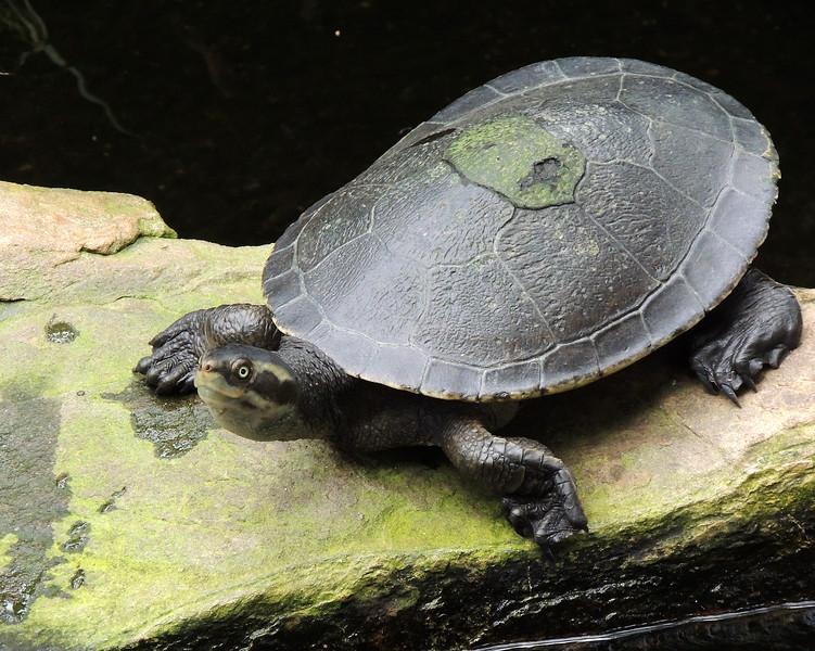 Cairns Tropical Zoo 110 N.jpg