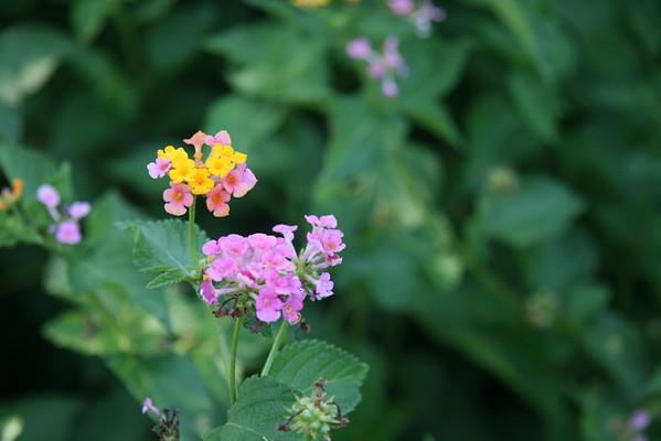 Bain Flower Gardens 2009