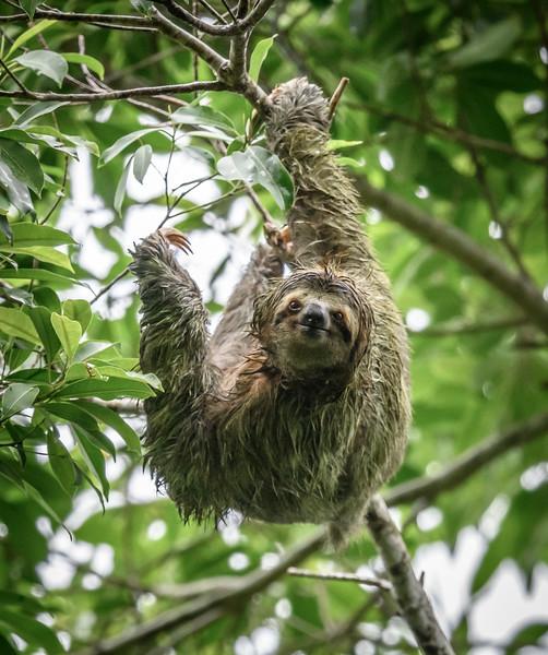 2018-07-16_16h16m24s_850_5816_Costa Rica.jpg