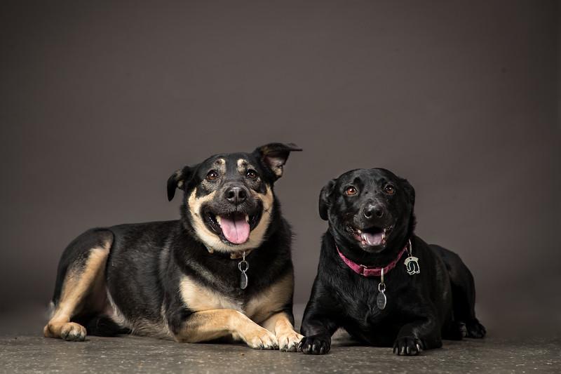 19_0712_dogs_ww--10.jpg