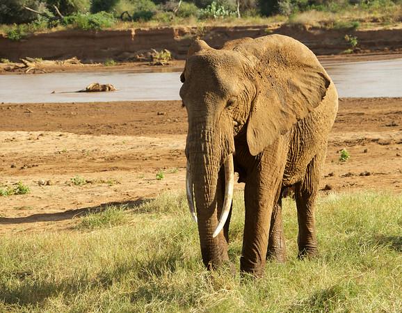 Kenya - Best Pics