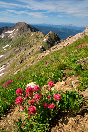 Flowers on the ridge of West Partner Peak, looking across at Vail, CO