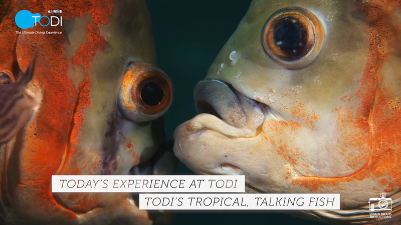 "TODI TODAY: TODI's Tropical, Talking Fish - Season 1, Episode 3: ""What are you up to tonight, John?"""