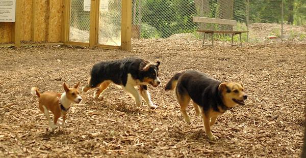 july 1 resize::Tayda, Oliver, Maddie