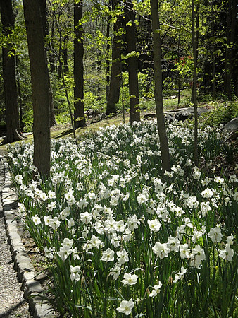 White Garden - April 29, 2012