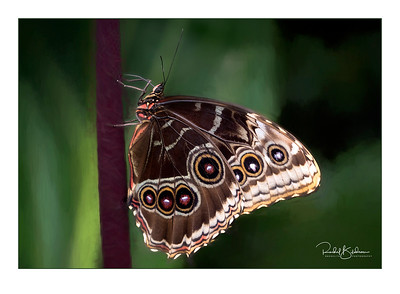 Butterflies go Free - March 2019