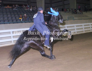 CLASS 24  THREE YR OLD OPEN STALLIONS