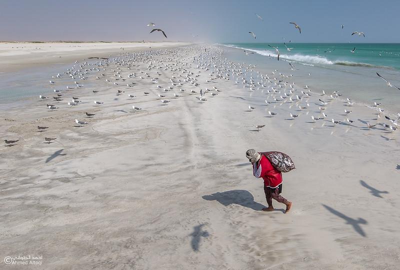 Sardine Season (24)- Dhofar.jpg