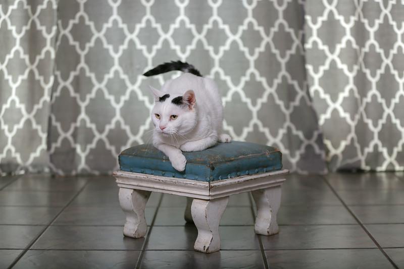Polzin Cats-4.jpg