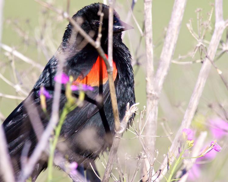 bird  10122.jpg