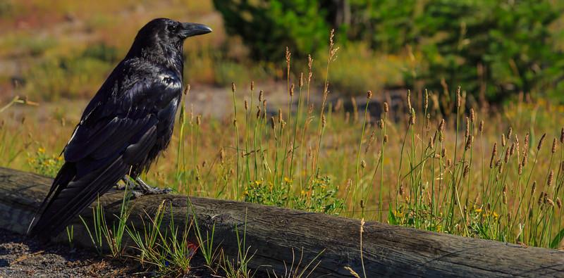So Poseth The Raven