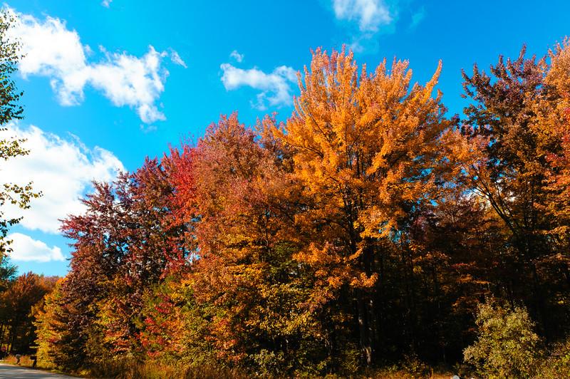 20141009 Autumn-3139-final.jpg