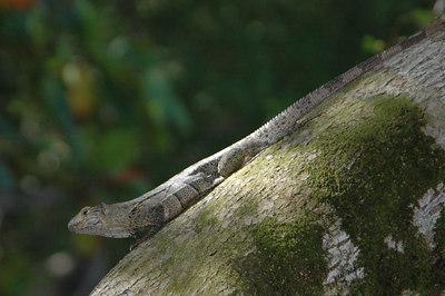 Costa Rica - Wildlife