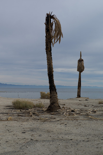 All that's left of the Yacht Club are some pretty beat up palm trees. It must have burnt down.