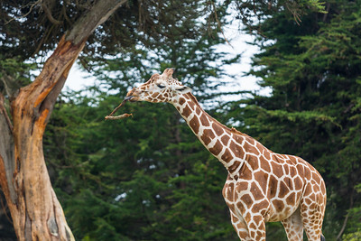 2019 - 05 SF Zoo